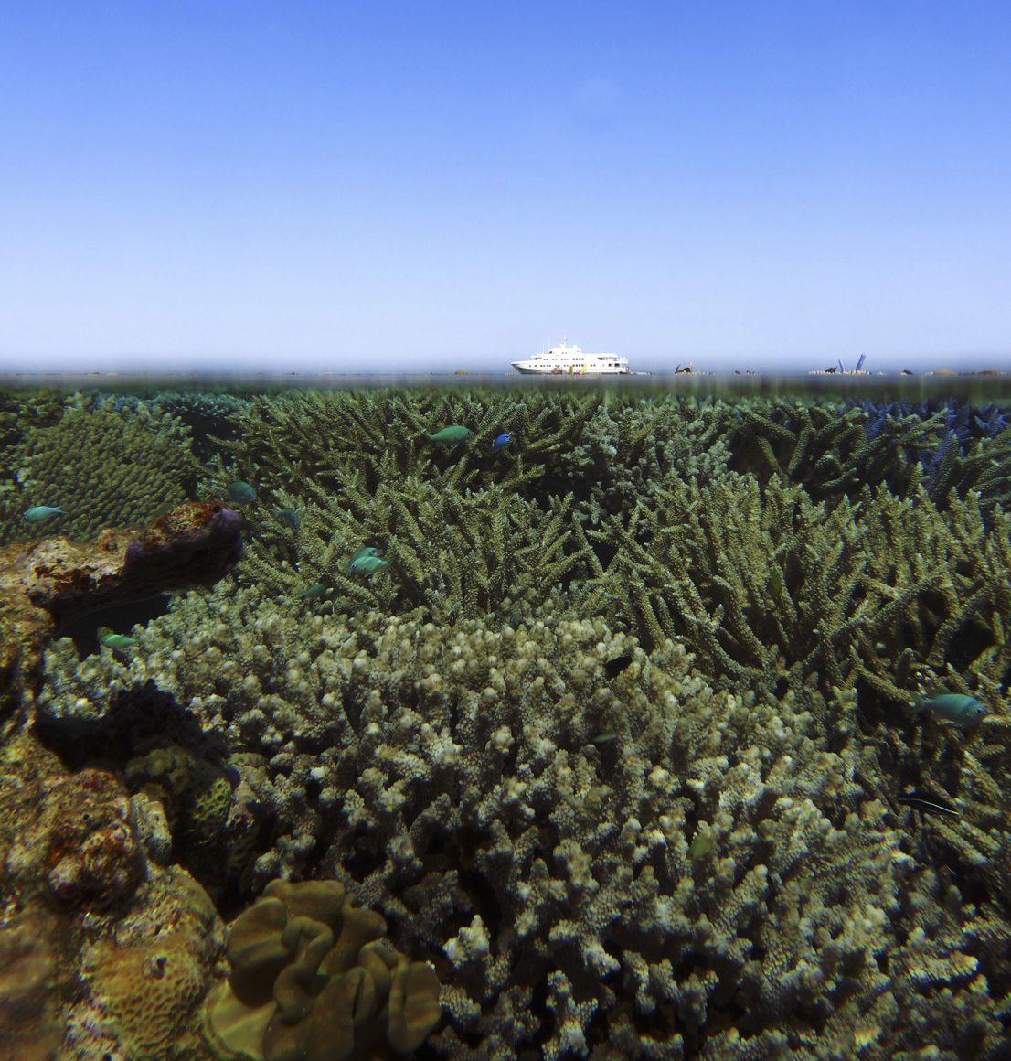 rowley shoals coral