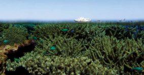 Coral Atoll Cruise Carolyn Beasley