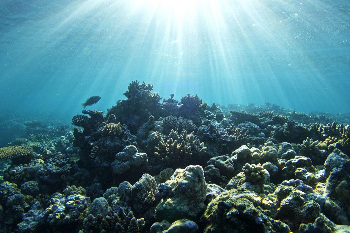 rowley shoals reef