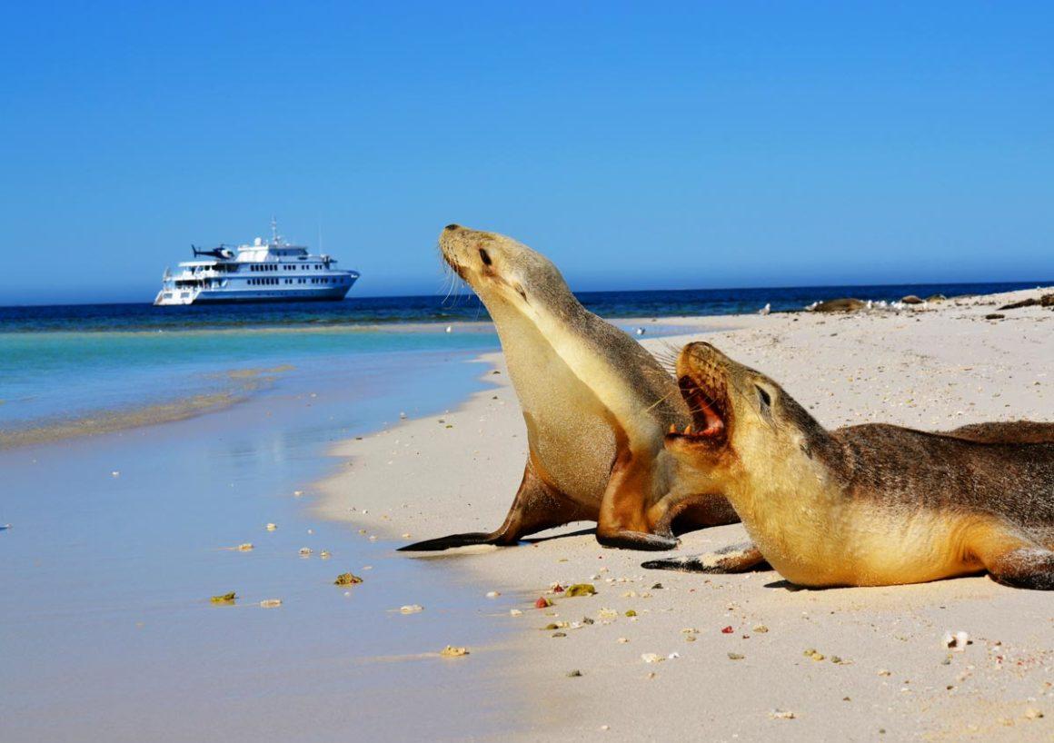 Kangaroo Island Beach Scene with Seals