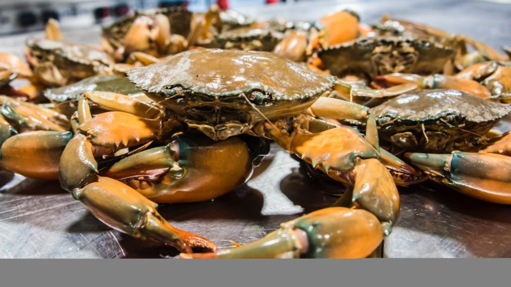 Kimberley Mud Crab