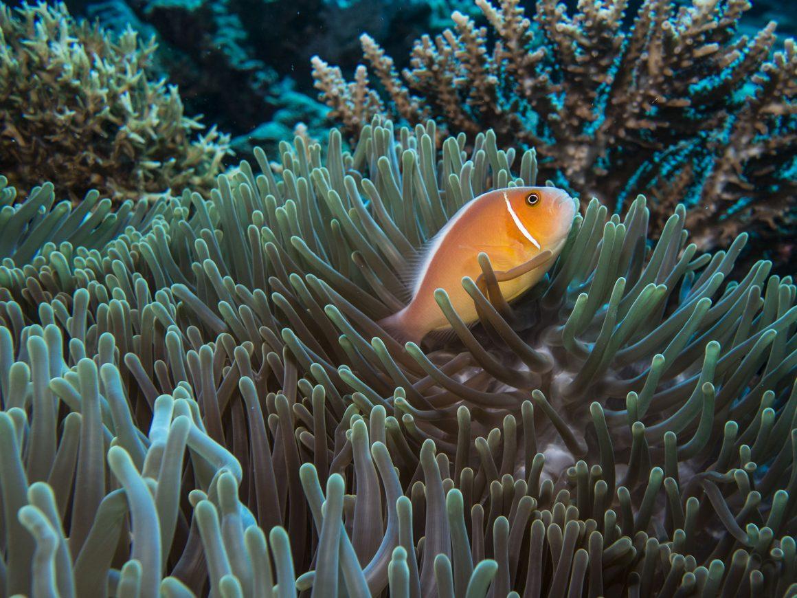 small fish at rowley shoals coral