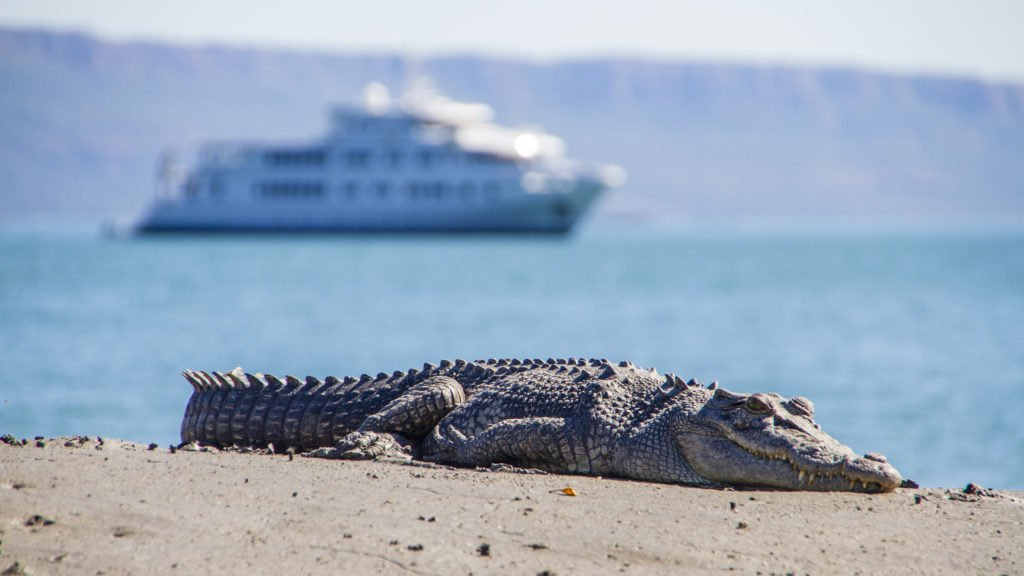 Crocodile- Kimberley coast