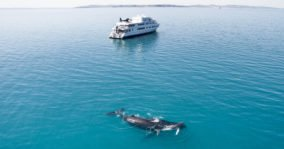Kimberley wilderness cruise with whale