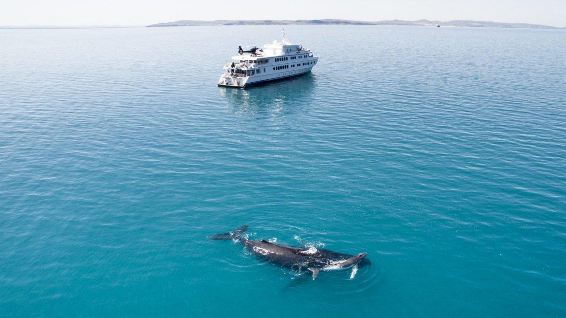 Kimberley with Whale