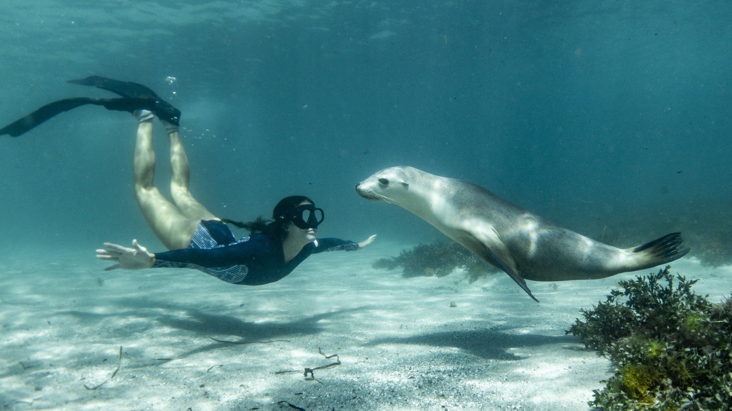 Scuba Diving - Adventure on the TRUE NORTH