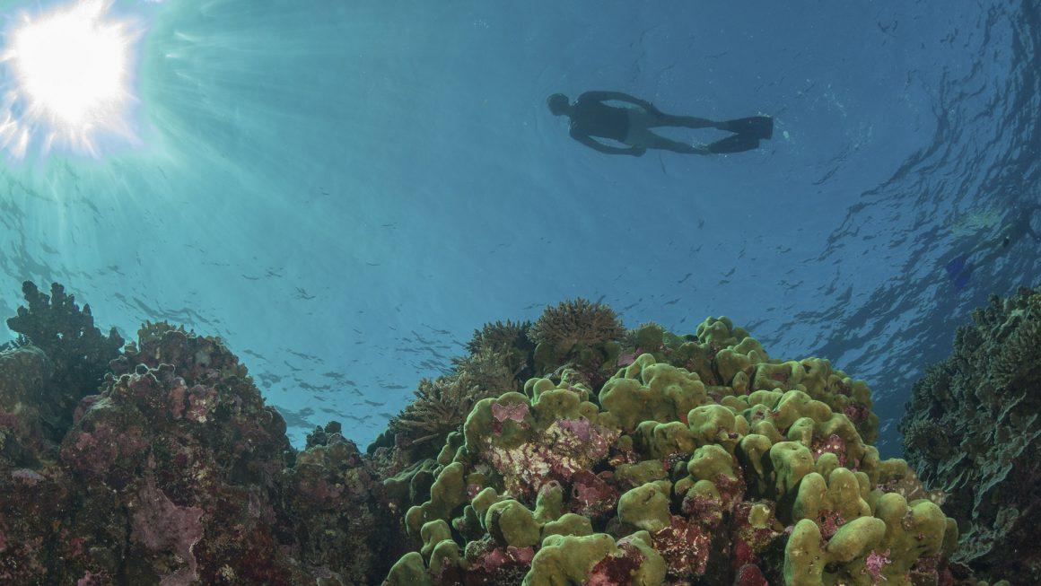 snorkelling at rowley shoals