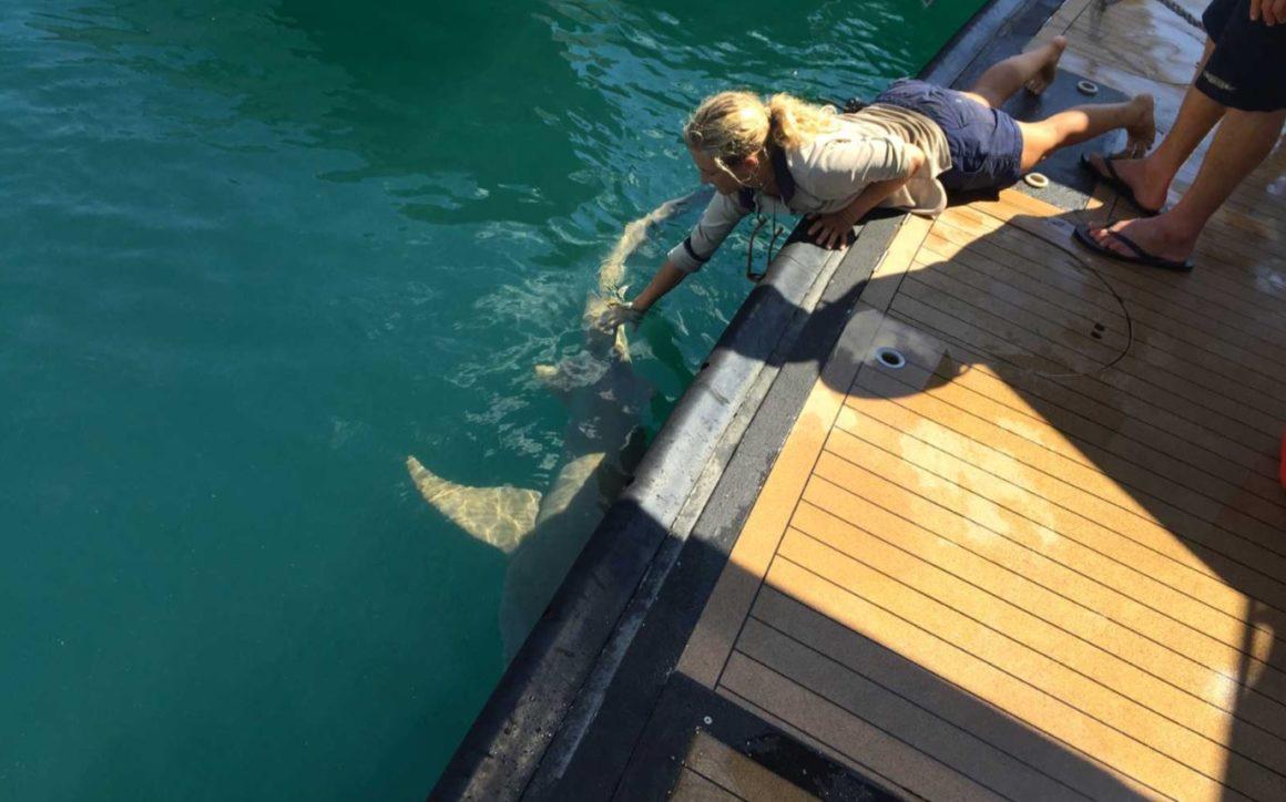Gentle Tawny Nurse Sharks