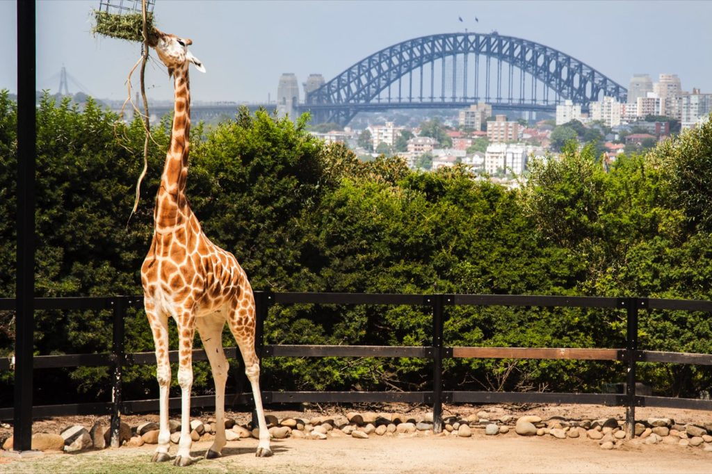 Taronga Zoo and Sydney Harbour Bridge