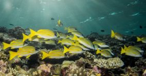 The Rowley Shoals An Underwater Smorgasboard