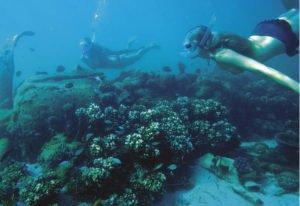 Japanese Zero Dive Wreck - Louisiades Archipelago