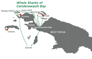 The Whale Sharks of Cenderawasih Bay Map