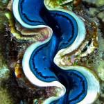 Underwater worlds