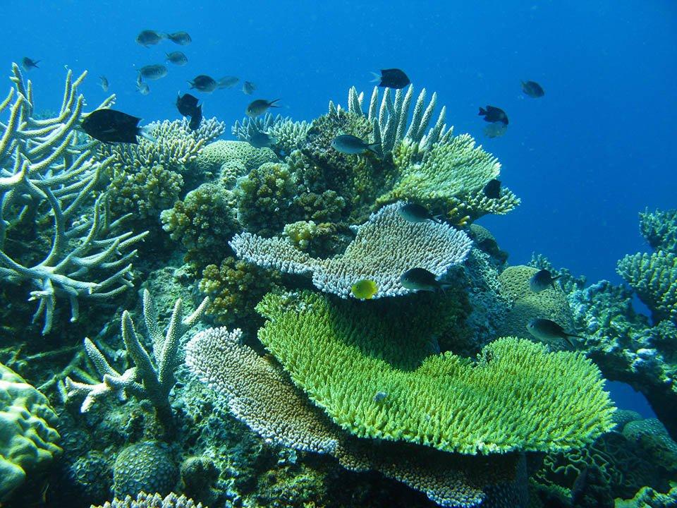 Untouched corals