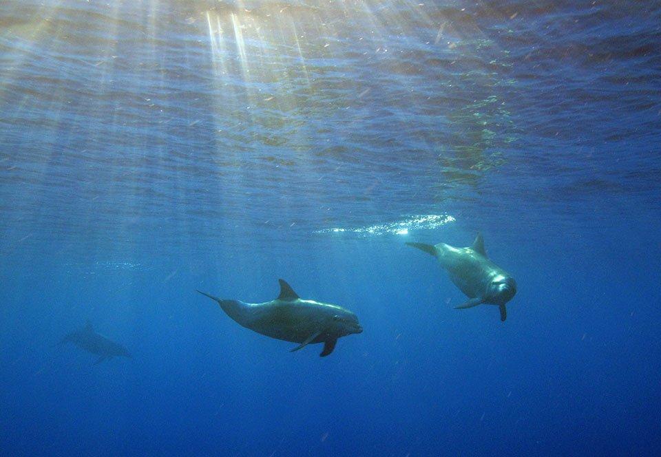 Snorkeling Cruises Australia