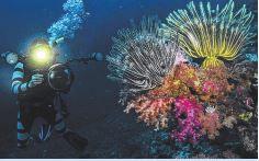 Under Water scuba