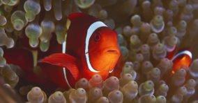 aneomefish_rajaampat_truenorth