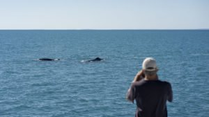 Whales at Kimberley